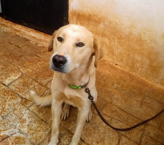 Δείτε σήμερα τον Σκύλο που έσερνε με το αυτοκίνητό του ηλικιωμένος στην Κρήτη