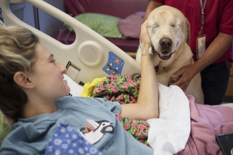 Μια τυφλή σκυλίτσα κάνει παρέα σε άρρωστα παιδάκια σε νοσοκομείο