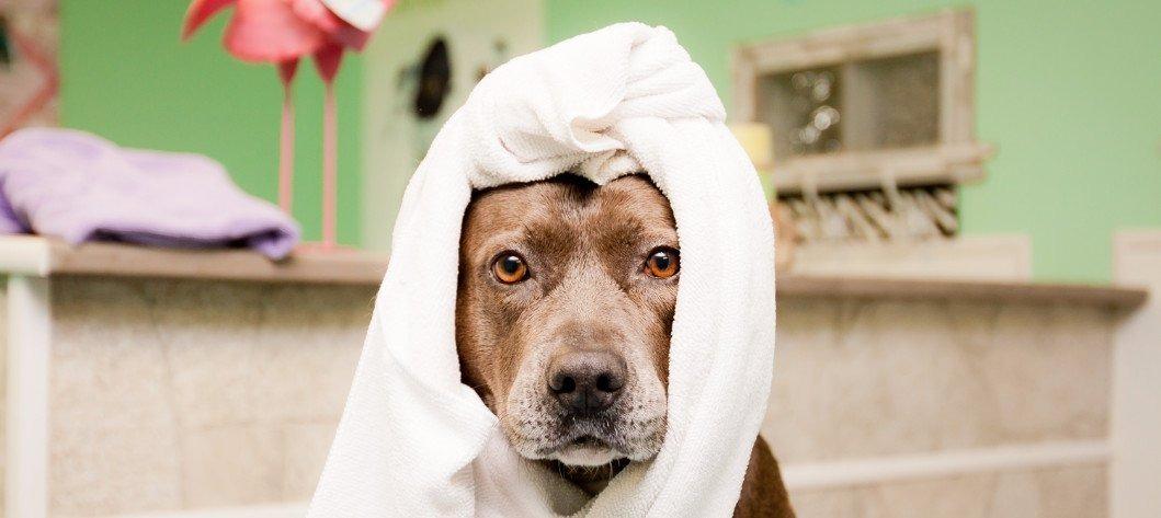 Σκύλος και Παραλία: Προετοιμάσου σωστά!